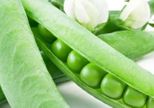 豌豆的品种有哪些 都有哪些特点